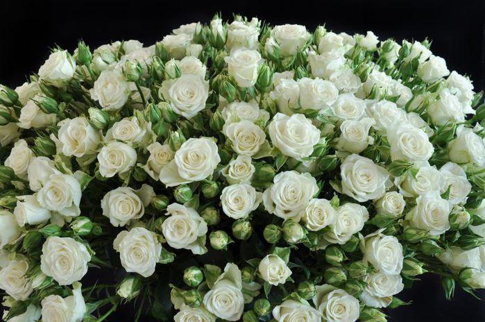 Красивый огромный букет цветов