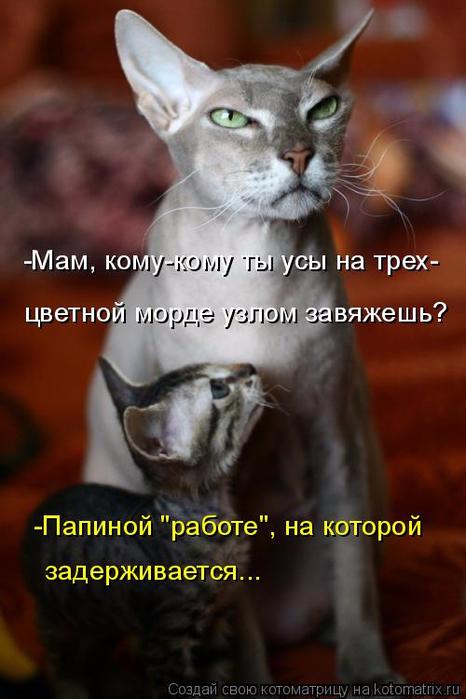 kotomatritsa_- (466x700, 287Kb)