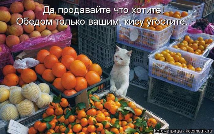 kotomatritsa_0t (700x440, 391Kb)