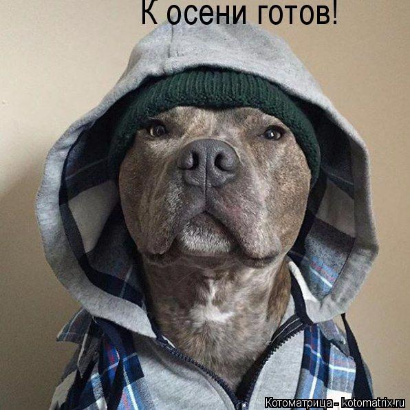 kotomatritsa_1 (596x596, 279Kb)