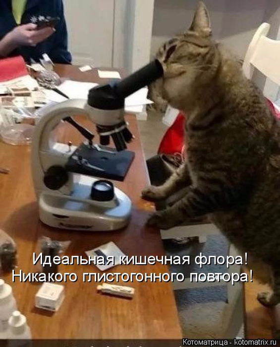 kotomatritsa_4c (565x700, 345Kb)