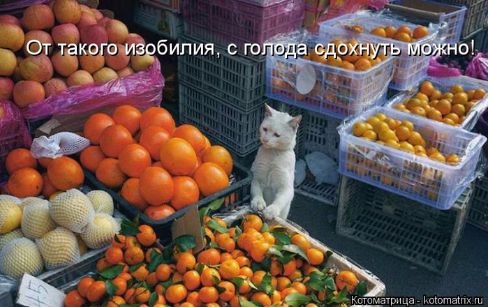 kotomatritsa_4l (700x440, 385Kb)
