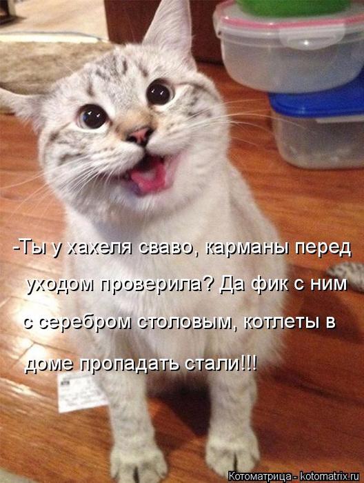 kotomatritsa_7W (528x700, 392Kb)