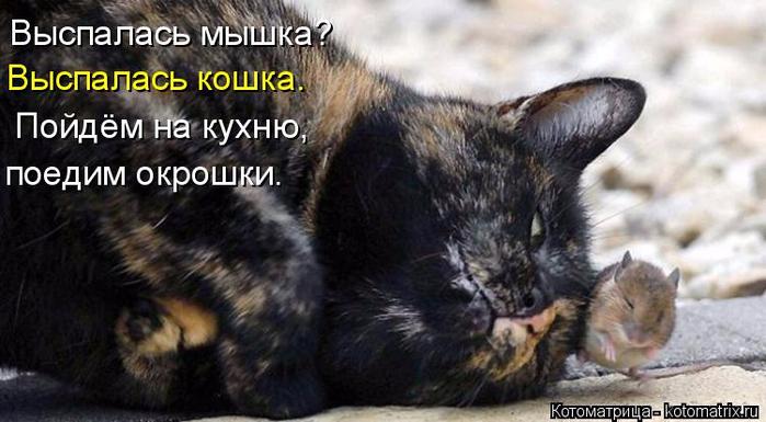 kotomatritsa_b (700x385, 266Kb)