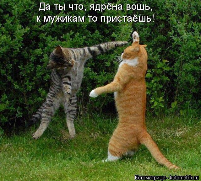 kotomatritsa_CL (640x577, 468Kb)