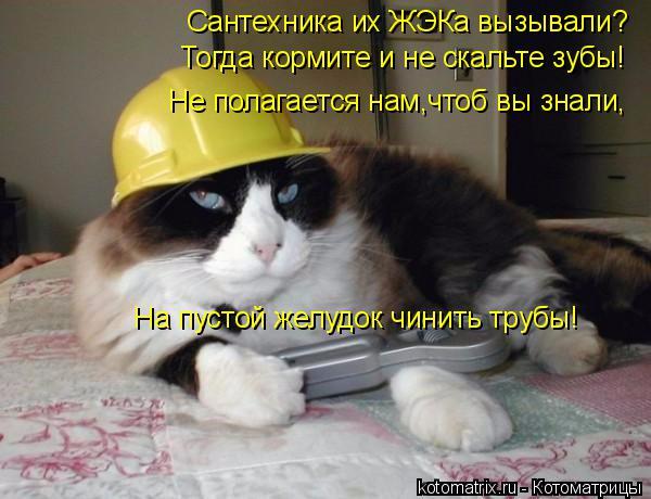 kotomatritsa_g (2) (600x460, 240Kb)