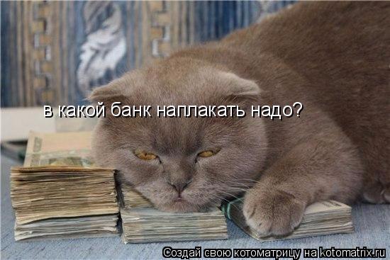 kotomatritsa_HL (550x367, 168Kb)