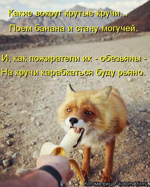 kotomatritsa_M7 (481x600, 305Kb)