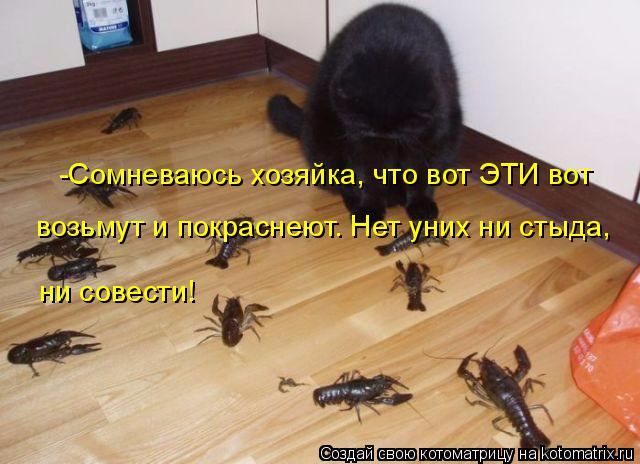 kotomatritsa_Nr (640x464, 262Kb)
