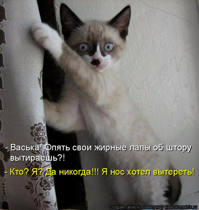 kotomatritsa_p (661x700, 346Kb)