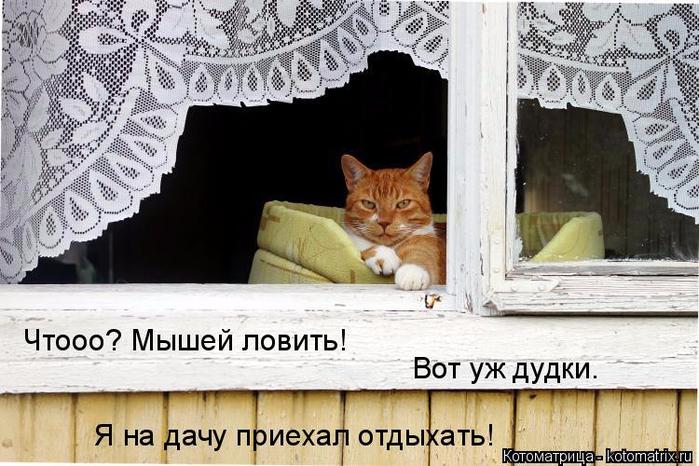 kotomatritsa_q (1) (700x466, 337Kb)