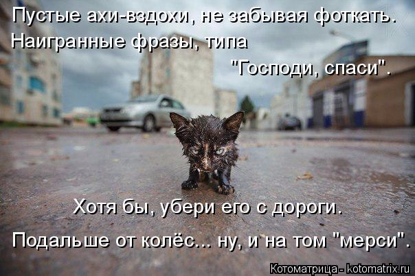 kotomatritsa_Q1 (604x403, 235Kb)