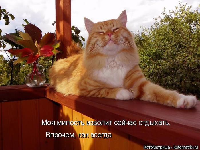 kotomatritsa_Ss (700x524, 391Kb)