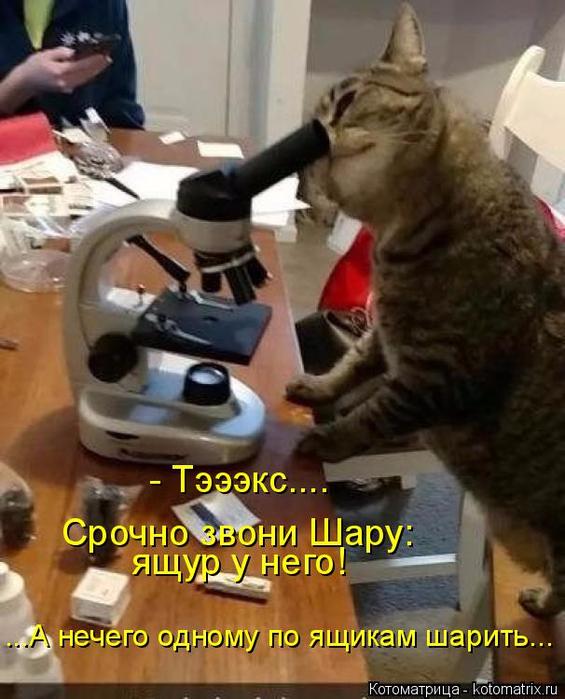 kotomatritsa_x (565x700, 375Kb)