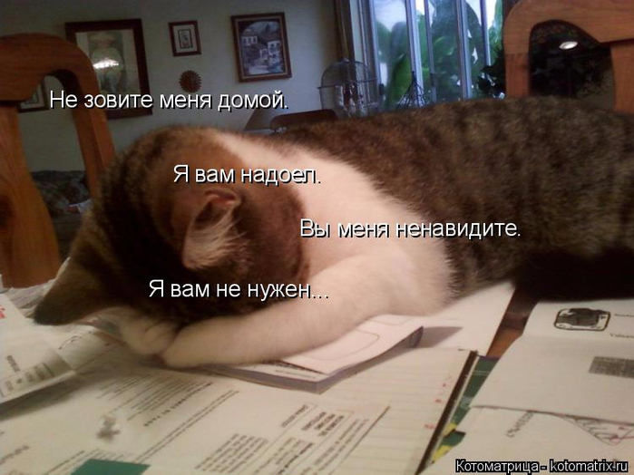 kotomatritsa_cI (700x524, 316Kb)