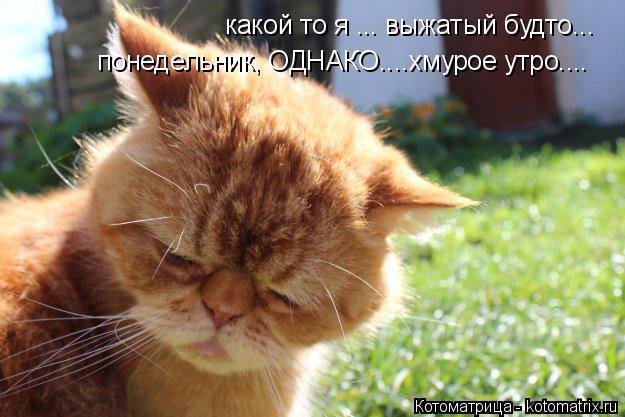 kotomatritsa_RT (625x417, 279Kb)