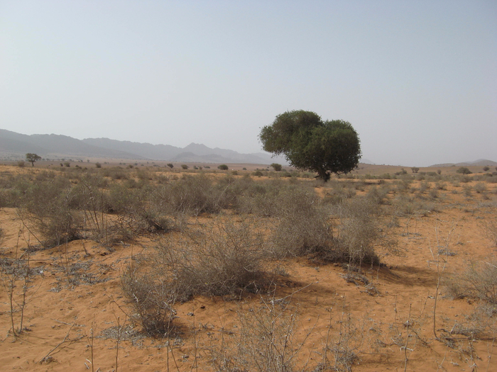 Марокко (266) (700x525, 437Kb)