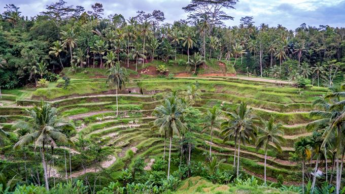 Bali-rice-field-H (680x382, 449Kb)