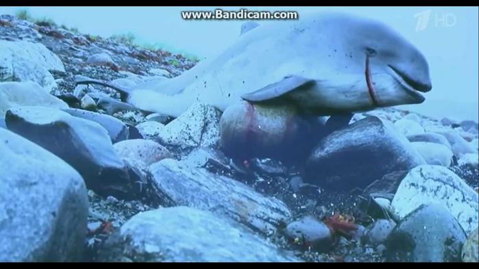 Убить Дельфина... (700x393, 538Kb)