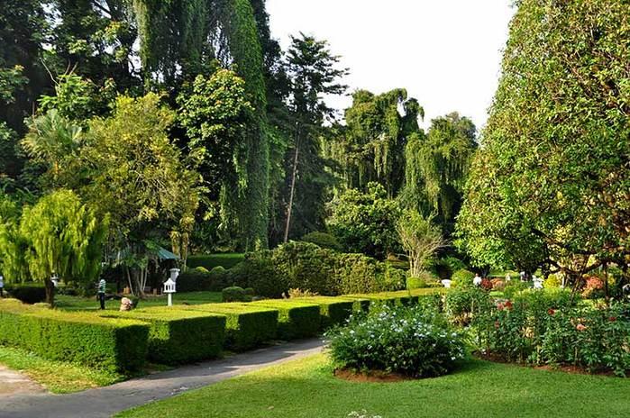Peradeniya-botanical-garden-2 (700x464, 93Kb)