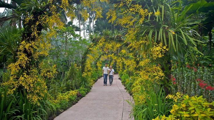 Singapore-Botanic-Gardens-39503 (700x393, 150Kb)