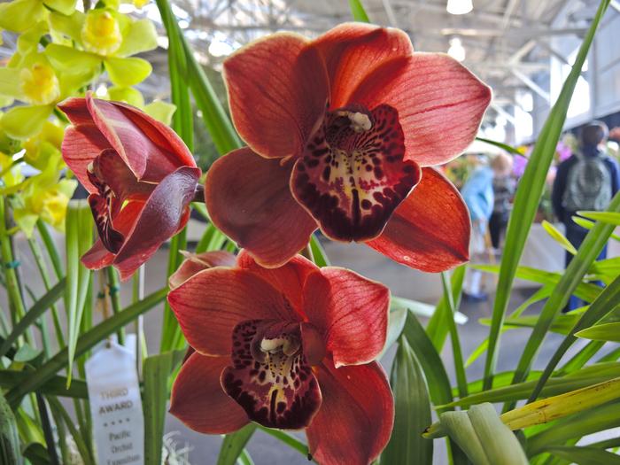 02-20orchids08 (700x525, 416Kb)