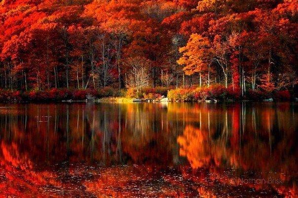 осень прекрасна (604x402, 81Kb)