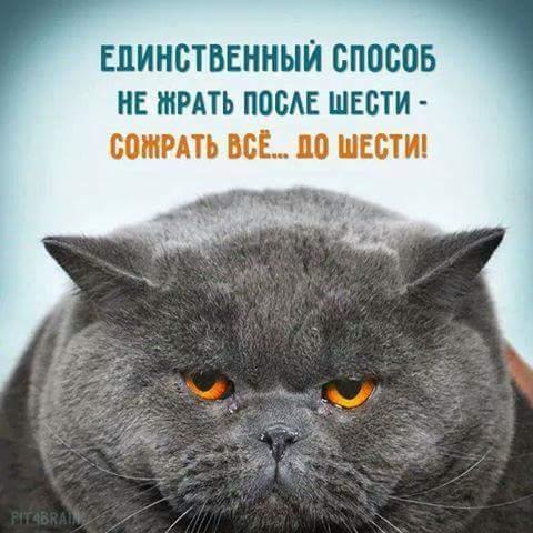 FB_IMG_1471637783155 (480x480, 36Kb)