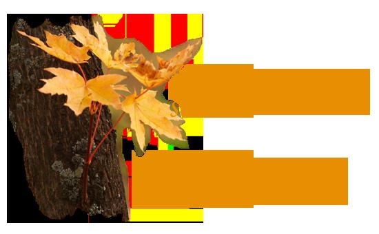 5152557_pngst_8e7613e74c70_2_ (550x340, 170Kb)