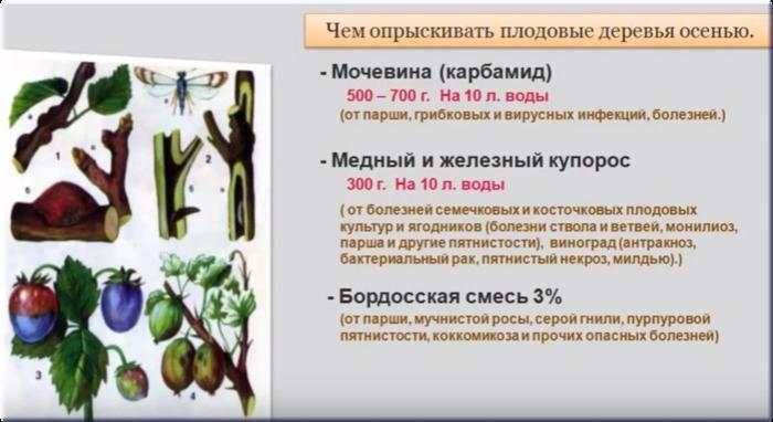 опрыскивание деревьев осенью (700x382, 322Kb)