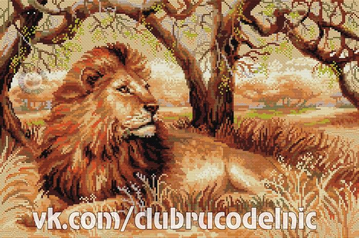 Царь зверей (700x464, 599Kb)