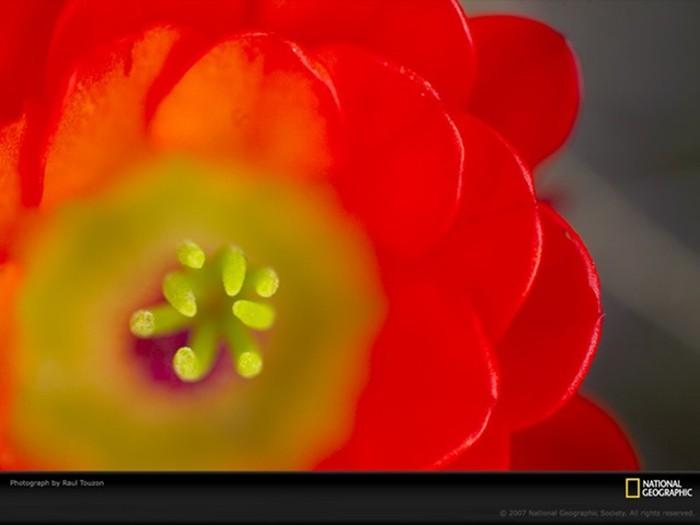 Красивые узоры природы   натуральные паттерны из цветов, листьев и других объектов