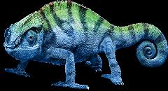 chameleon (240x130, 57Kb)