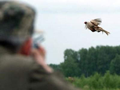 Где живет фазан на самом деле?