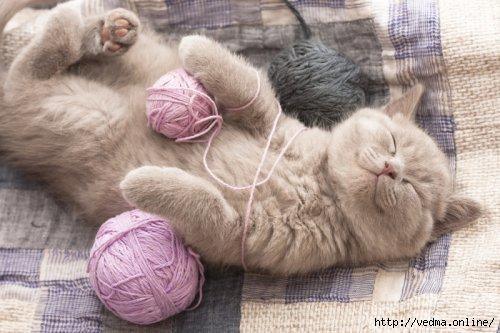 Кошка в помощь (500x333, 99Kb)