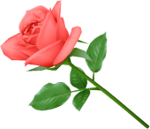rose_PNG650-170x146 (170x146, 21Kb)