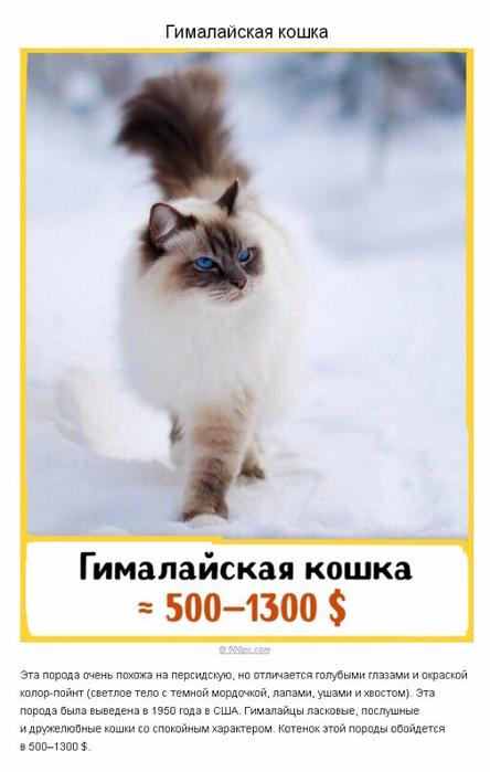 sBPAoZzwo3E (444x700, 214Kb)
