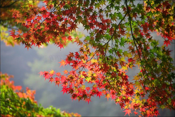 beautiful-fall-24 (700x467, 479Kb)