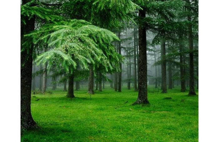 image лес (700x455, 345Kb)