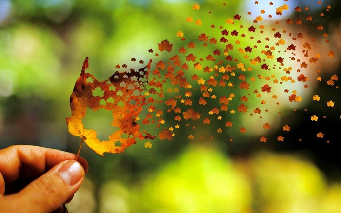 Nature___Seasons___Autumn_Autumn_leaf_breaks_down_into_small_leaves_108028_ (700x437, 72Kb)