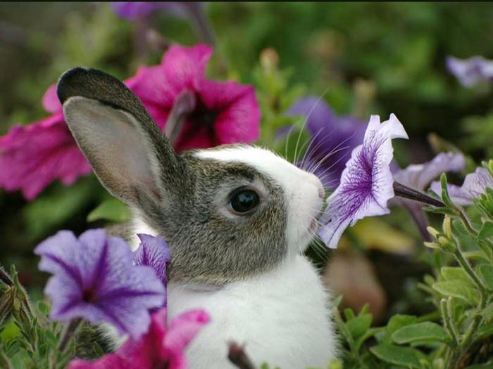 Картинки красивые с цветами и животными