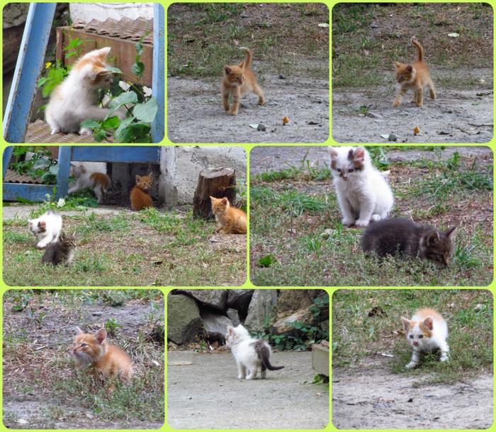 collage котики (700x609, 722Kb)