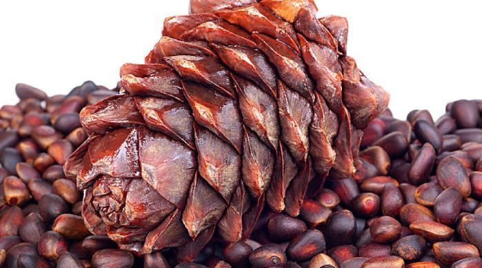 Рецепты из кедровых орехов