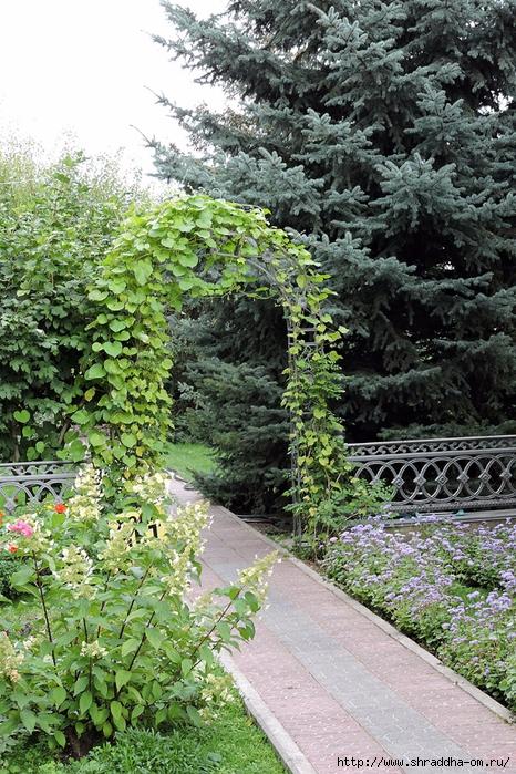 Алексеево-Акатов женский монастырь, Воронеж (2) (466x700, 408Kb)