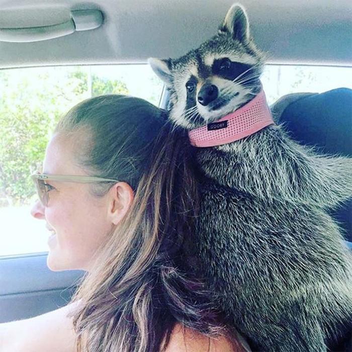 10 самых популярных Instagram аккаунтов о животных