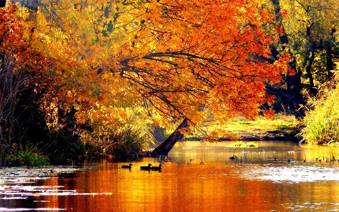 5369832_autumntale2560x1600wallpaper (700x437, 365Kb)