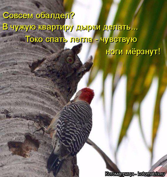 koty1 (569x604, 313Kb)