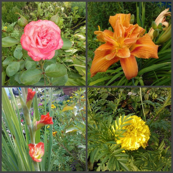 цветы августа (700x700, 811Kb)