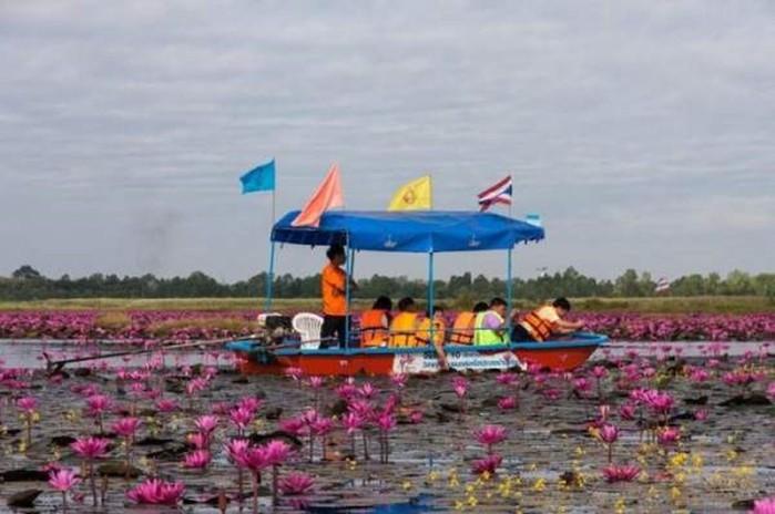 Сказочный Таиланд: Озеро розовых лотосов
