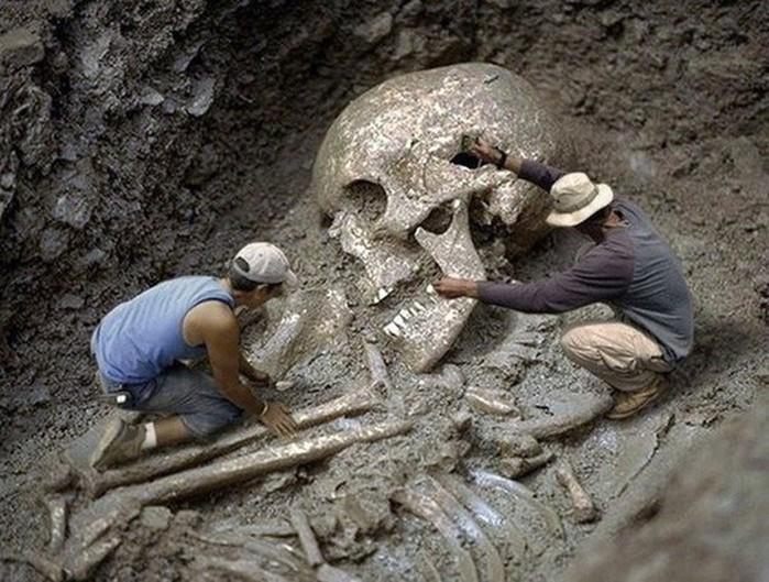 Утка: Смитсоновский институт признал уничтожение тысяч скелетов гигантов